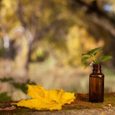 photo de feuilles et huiles essentiels dans la foret